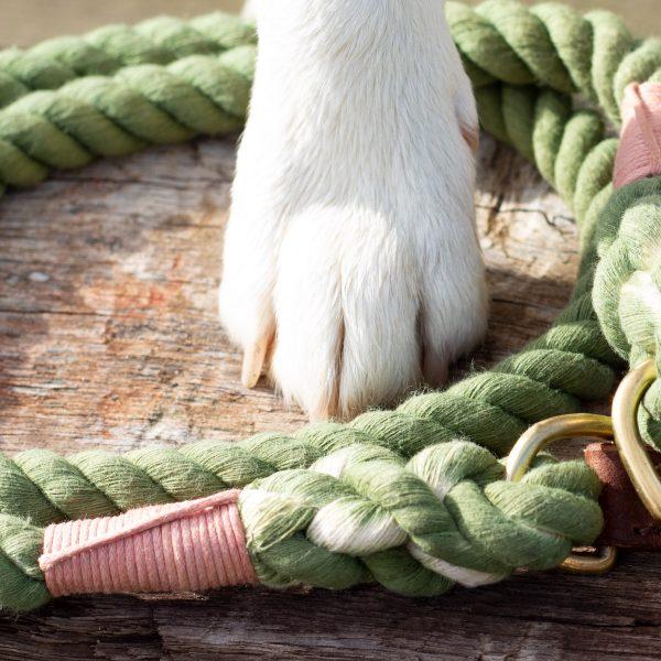 hunde tauleine